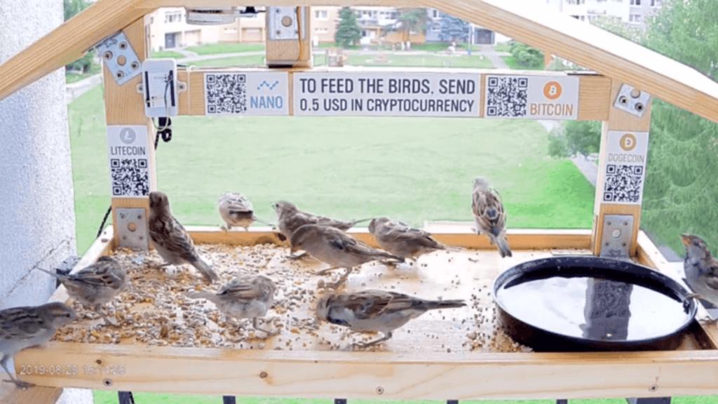 nourriture oiseau