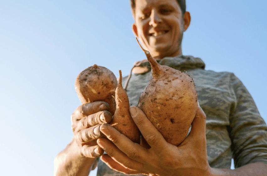 Jeton YAM – La patate chaude fait son retour dans le potager de la DeFi