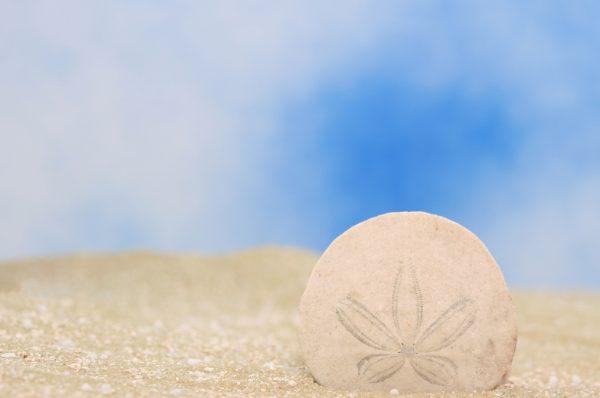 Le Sand Dollar des Bahamas