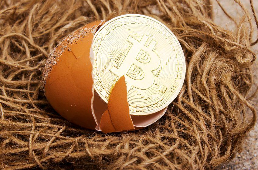 842 000 BTC détenus par les entreprises et un Bitcoin au 15ème rang en valeur marchande