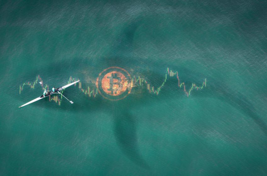 Bitcoin – Les baleines mènent la danse et les autres suivent comme ils peuvent