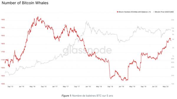 Augmentation du nombre de baleines Bitcoin (BTC)